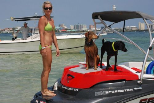 Pups on Board - '08 SeaDoo Speedster 150